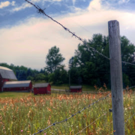 Barbed Wire by Fraya Replinger - Buildings & Architecture Other Exteriors ( clouds, farm, fence, red, barn, grass, farms, barbed wire, barns )