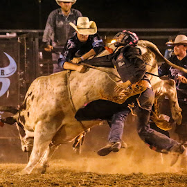 To the Rescue by Cindy Hicks-Butler - Sports & Fitness Rodeo/Bull Riding