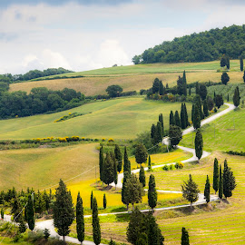 Toscana by Albin Bezjak - Landscapes Prairies, Meadows & Fields