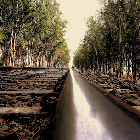 Another Aspect by Jatin Malhotra - City,  Street & Park  Street Scenes ( railway, tree, track, train, steel )