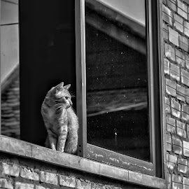 Cat in Window by Rick Pelletier - Novices Only Street & Candid