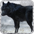 Black Wolf Wallpaper APK for Ubuntu