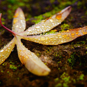 by Davis L. Antonio - Nature Up Close Leaves & Grasses ( fall leaves on ground, fall leaves )
