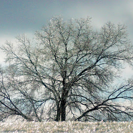 by Pamela Wittern - Nature Up Close Trees & Bushes (  )