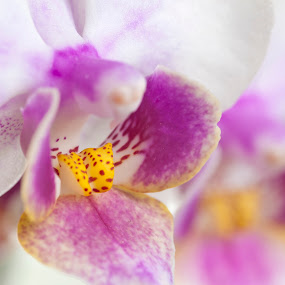 Orchid by Daniel Erstad - Nature Up Close Flowers - 2011-2013