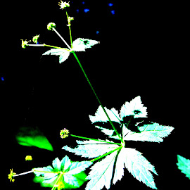 by Bob Wikert - Nature Up Close Other plants