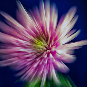 Flowers 12Feb17-3NoC.jpg
