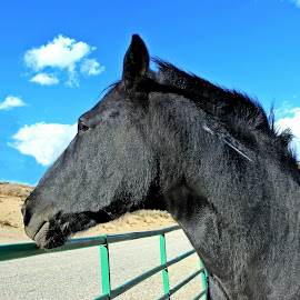 Moby by Carrie Murray-Feely - Animals Horses