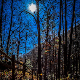 by Lisa Frisby - Landscapes Mountains & Hills ( mountain, autumn, trail, sunshine, hiking, hike, north carolina )