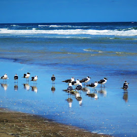 Seagulls on the seashore by Mary Gallo - Landscapes Waterscapes ( water, sand, seashore, nature, wildlife, seagulls, ocean, landscape,  )