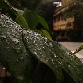 wet leaves by Neil Mukhopadhyay - Instagram & Mobile Android