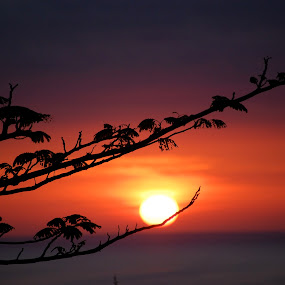 Purple Sunset by Katie Ehrlich - Landscapes Sunsets & Sunrises ( sky, purple, sunset, branch, ocean )