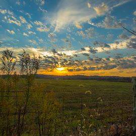 Fencerow Sunrise by Jeff Lebovitz - Landscapes Prairies, Meadows & Fields ( clouds, fence, hoop's place, logans lane, weeds, sunrise )