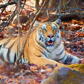 Tiger at rest by Pravine Chester - Digital Art Animals ( animals, tiger, digital art, digital painting, manipulation,  )