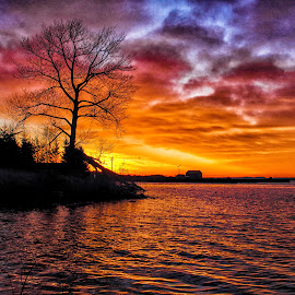 Sunrise over the mouth of the Current River by Don Malcolm - Landscapes Sunsets & Sunrises ( tree, waterscape, cloudscape, sunrise, colours )