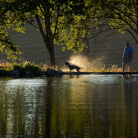 sunset by Ingrid Claeys - Animals - Dogs Playing ( water, sunset, summer, france, dog )