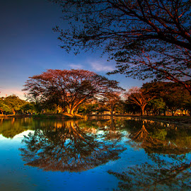Flamboyan gugur by Waluya Aljiun - Landscapes Sunsets & Sunrises ( reflection, sunset, west java, flamboyan, subang )