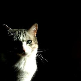 by Maria Gerolymatou - Animals - Cats Portraits (  )