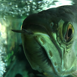 by Anjar Prasetyo - Animals Fish