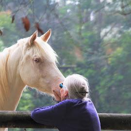 by Carolyn Lawson - Animals Horses (  )