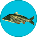 True Fishing APK for Bluestacks