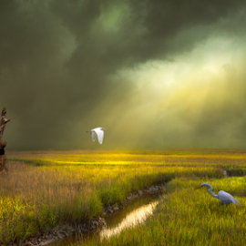 Marshy Dreams by Andy Taber - Landscapes Prairies, Meadows & Fields (  )