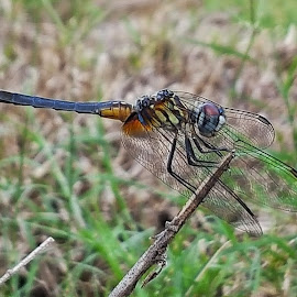 Morning Dragonfly by Christina McGeorge - Instagram & Mobile Android ( dragonfly,  )