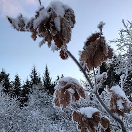 Winter by Bjarklind Þór - Instagram & Mobile Instagram