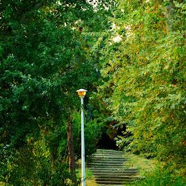 by Patricia Vlad - City,  Street & Park  City Parks (  )