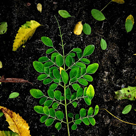 Save Green.. because 1 Tree one Life  by Soumyabrata Roy - Nature Up Close Leaves & Grasses