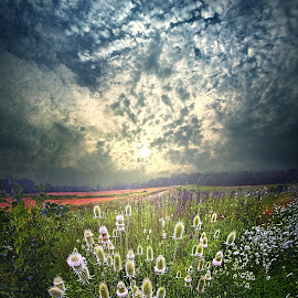As The Seasons Roll By by Phil Koch - Landscapes Prairies, Meadows & Fields ( trending, country, shadow, rural, office, scenic, hope, canon, beautiful, pastel, weather, season, sky, emotions, natural, inspired, heaven, morning, field, light, peace, shadows, dawn, photography, love, sunrise, mood, vertical, endless, clouds, fineart, sun, life, colors, summer, unity, joy, lines, popular, arts, meadow, wisconsin, art, living, green, nature, inspirational, dramatic, portrait, horizons, horizon, environment, sunlight, outdoors, blue, sunset, earth, travel, serene, landscape,  )