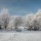 8232 jpg Hoer Frost Jan-27-17-8232.jpg