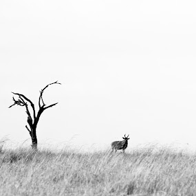 Lone Tree by VAM Photography - Landscapes Prairies, Meadows & Fields ( b&w, tree, serengeti, tanzania, landscape, animal )