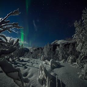 Night by Jens Andre Mehammer Birkeland - Instagram & Mobile Other ( instagram, winter, tree, aurora borealis, trees,  )