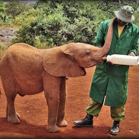 The Sheldrick Wildlife Trust by Of-the-Star Designs - News & Events World Events ( baby elephant, orphan, elephant, kenya, orphanage, africa, rhino, sheldrick wildlife trust, baby bottle )