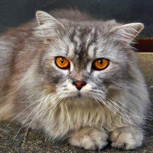 @CAT.jpg