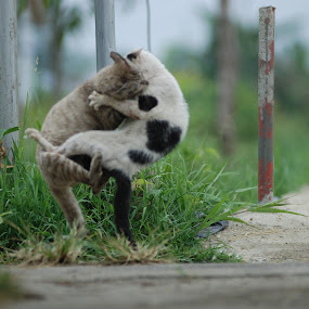 fighting by Faisal Alwie - Animals - Cats Portraits ( cat, animal )