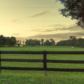 Peeking In on the Farm 2 by Mark Davis - Landscapes Prairies, Meadows & Fields ( clouds, sunset, trees, landscape, dusk, evening, rural )