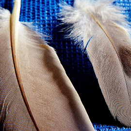 Feathers by Pradeep Kumar - Artistic Objects Other Objects