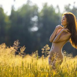 Summer Evening by Dmitry Laudin - Nudes & Boudoir Artistic Nude ( field, nude, girl, grass, sunset, summer, hair, evening )