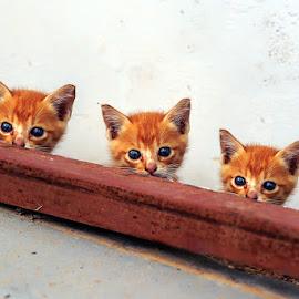 TREE CAT by Sandi Nopri yanto - Animals - Cats Kittens