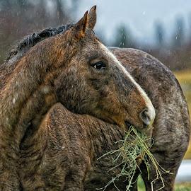 Breakfast in the Rain by Twin Wranglers Baker - Animals Horses
