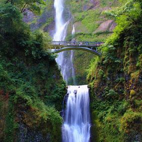 Multnomah Falls by Bryan Rasmussen - Landscapes Waterscapes ( water, oregon, peaceful, multnomah falls, green, waterfall, bridge, multnomah )