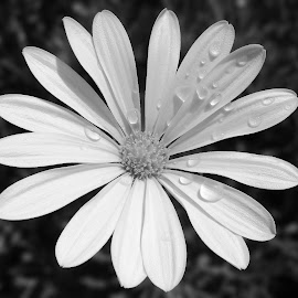 by Kris Pate - Black & White Flowers & Plants