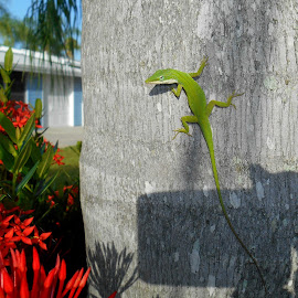 chameleon green by Sandy Davis DePina - Instagram & Mobile Android ( palm tree, red flower, florida, green, chameleon )