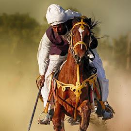 Chacha Grand by Abdul Rehman - Sports & Fitness Other Sports ( sand, natural light, desert, horse, sun, horseback, beautiful light, rally, thrill, pakistan, adventure, dust cloud, dangerous sport, horse riding, dust, sun light )