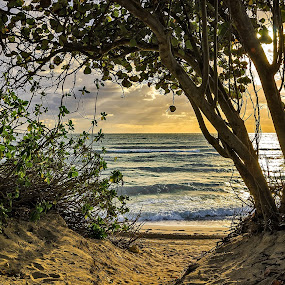 Ocean View by Björn Olsson - Nature Up Close Trees & Bushes ( sand, sky, miami beach, ocean, landscape )