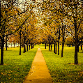 Symmetry of Autumn by Travis Wessel - City,  Street & Park  City Parks ( side walk, park, fall colors, autumn, fall, autumn colors, city park )