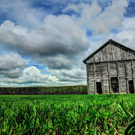barn by Fraya Replinger - Buildings & Architecture Other Exteriors ( clouds, blue sky, barn, cornfield, corn, green grass )