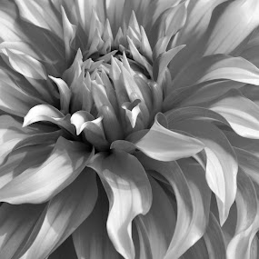 B &W FLOWERS # 2 by Debanjan Goswami - Flowers Single Flower (  )